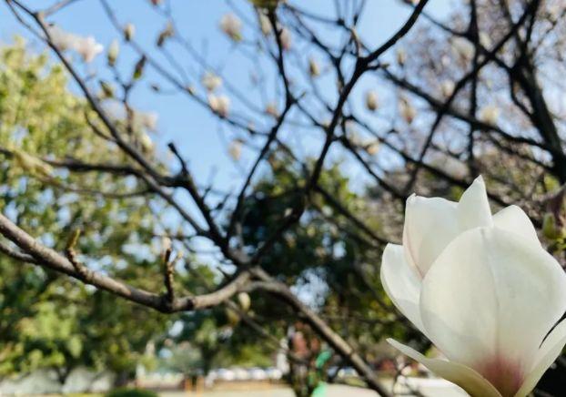 疫情犹在,防控不减!等你去看百花争艳的第一缕春色!